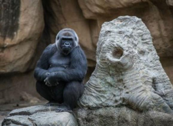 Memphis Zoo has over 3,500 animals and has been rated as one of the top zoos in the nation. Photo by Allen Gillespie