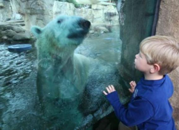 Explore the underwater Polar Bear exhibit at the Memphis Zoo. Photo by Troy Glasgow.