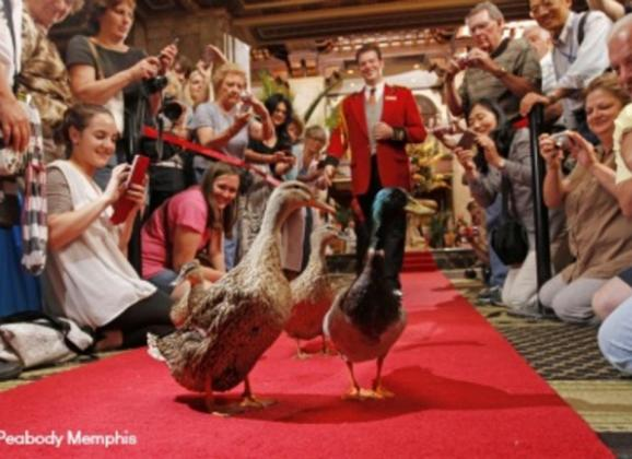 The Peabody Ducks and Duckmaster Anthony. Photo by The Peabody Memphis