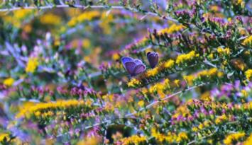 Butterflies love the flowers at the Botanic Gardens. Photo by Andrea Zucker.
