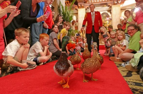Peabody Duck March. Photo Credit: The Peabody Memphis